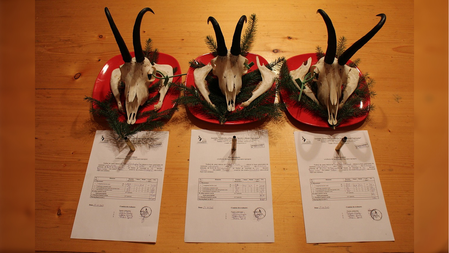Registration of Chamois Trophies (2013)